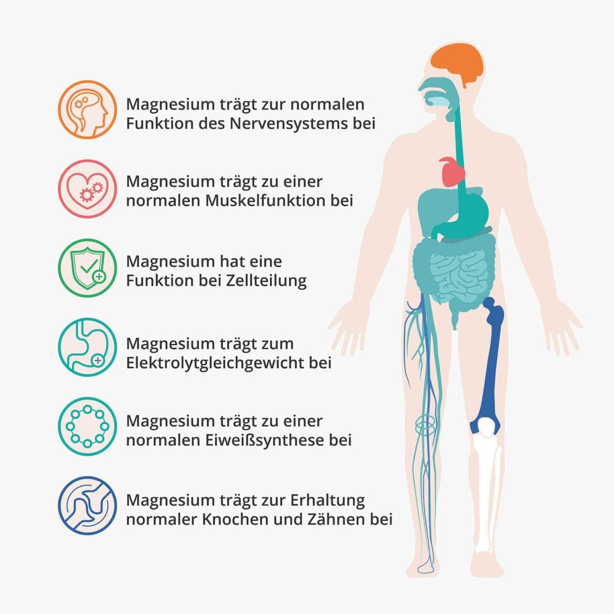 Casida Magnesiumcitrat Kapseln Vital – 120 Stk. 14362474 PZN Apotheke Muskelkater Muskelkrampf Sport3