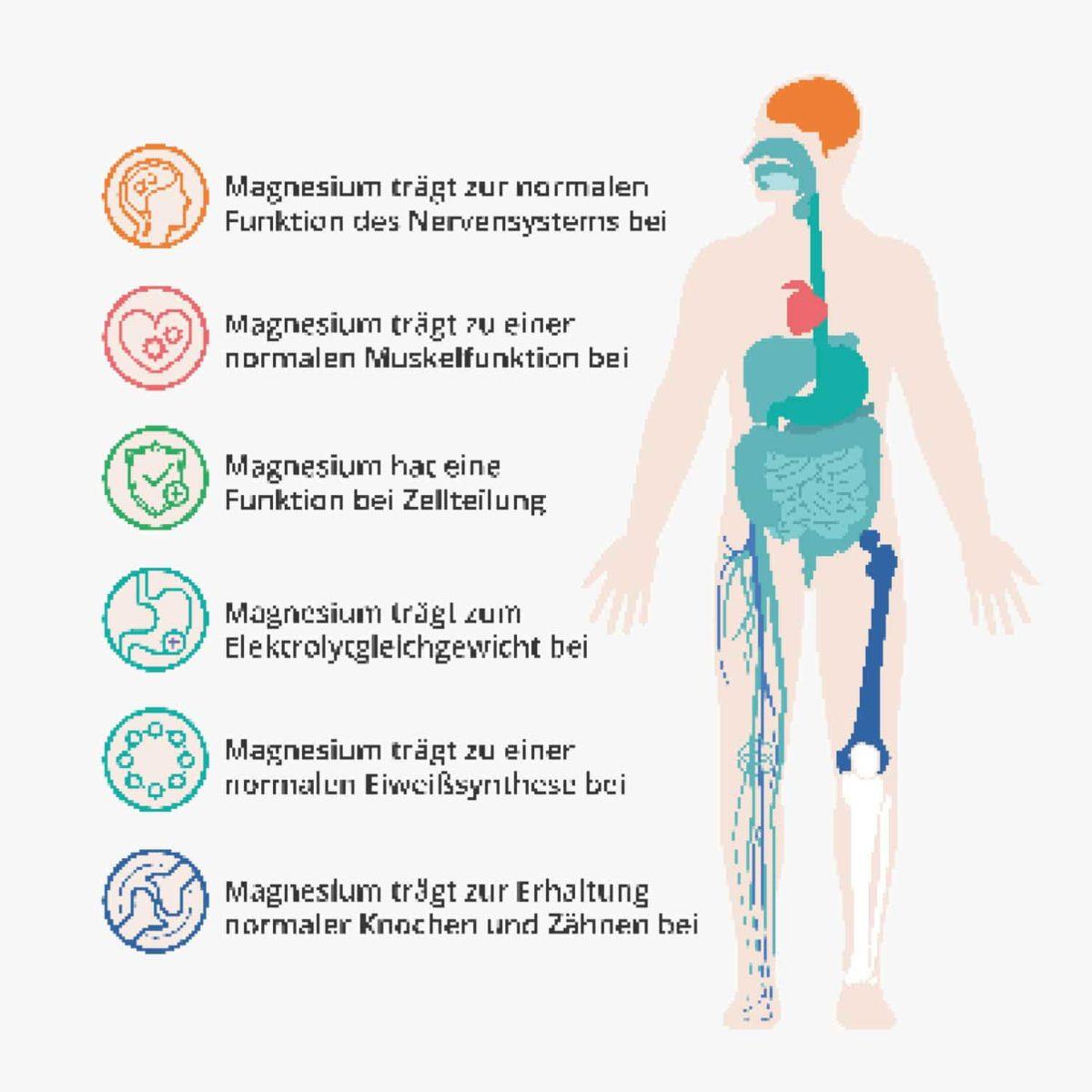 Magnesium Glycinate Capsules Vital – 120 Stk. 14362480 PZN Apotheke Bioverfügbarkeit organisches Magnesium3