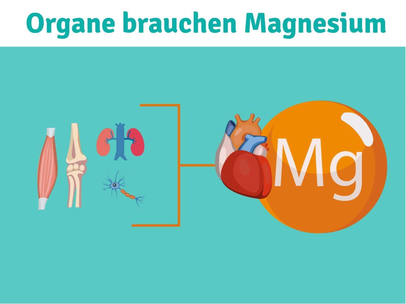 Organe brauchen Magnesium Diabetes Magnesimmangel Knochen Muskeln