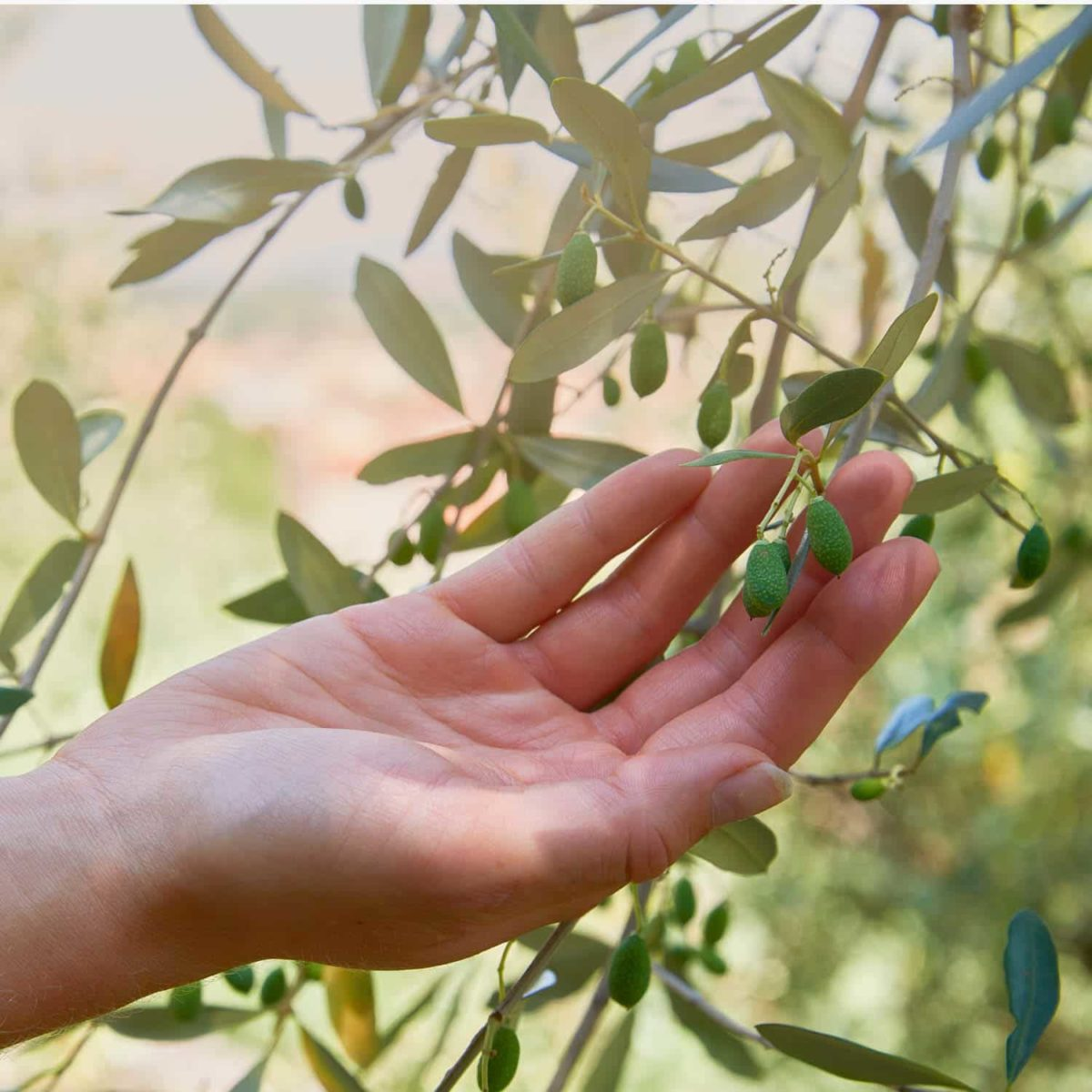 Casida Squalan Öl Haut & Haare – 30 ml 16852202 PZN Apotheke Ölive Massage trockene Haut pflegen natürlich Beauty3